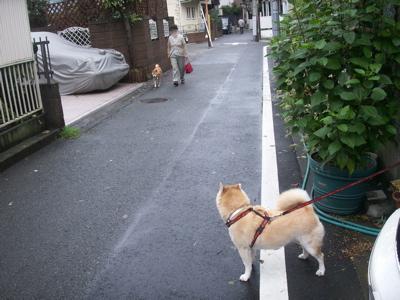 台風一過のお散歩01