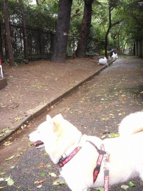 台風一過のお散歩06