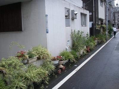 台風一過のお散歩08