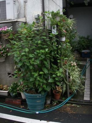 台風一過のお散歩09