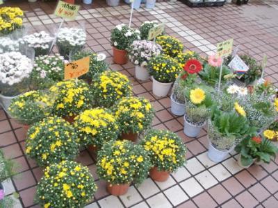 マック秋の花12