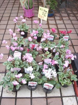 マック秋の花13
