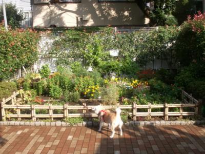 マックと花園01