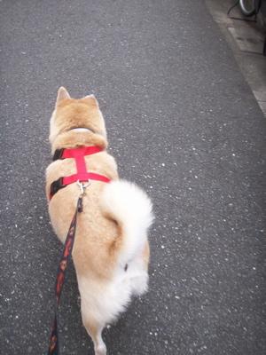 秋のお散歩01