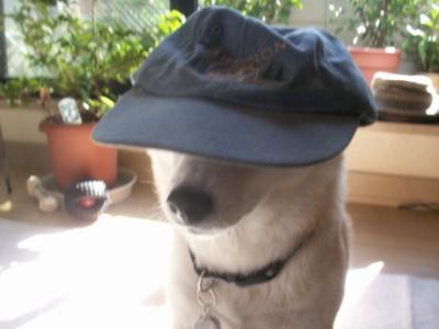 マック帽子01