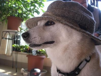 マック帽子06