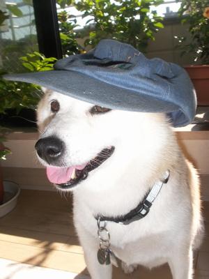 マック帽子08