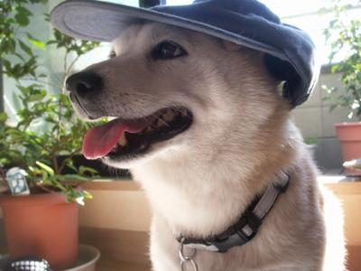 マック帽子09
