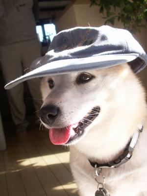 マック帽子10