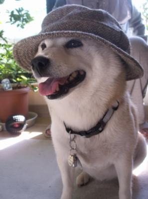マック帽子11