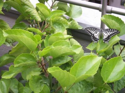 冬の蝶01