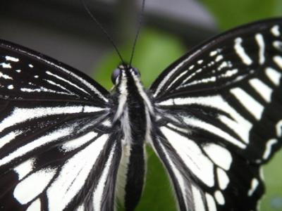 冬の蝶03