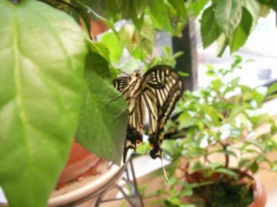 冬の蝶05