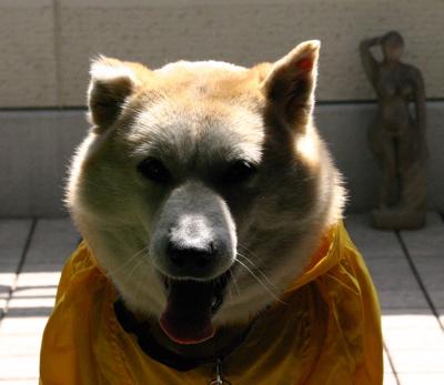 怪犬マック