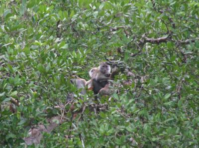 マングローブの森の生物05