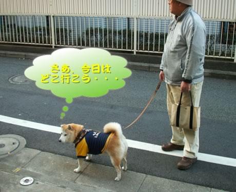 梅散歩001