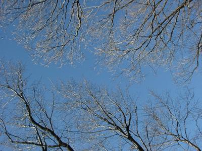 枝の写真3