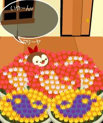 お花畑ーvvv