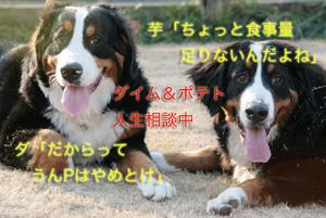 IMG_8306_30.jpg