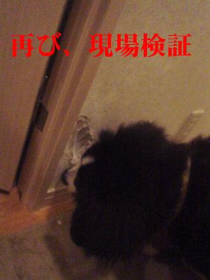 kensyou2.jpg