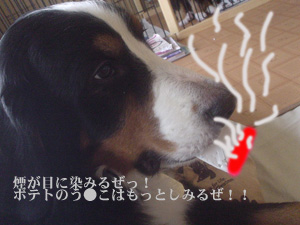 たばこだぜ