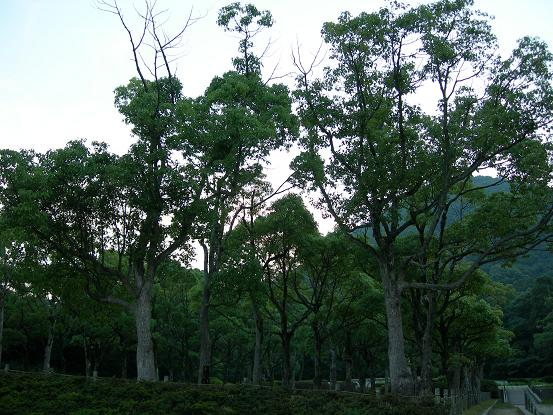kabutoyama1.jpg