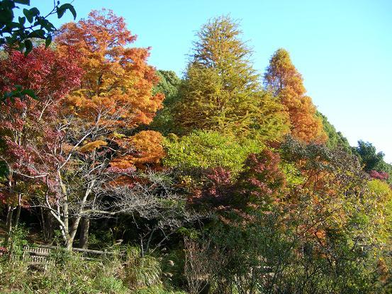 kabutoyama7.jpg