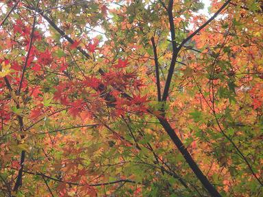 神庭の滝 043ブログ用大