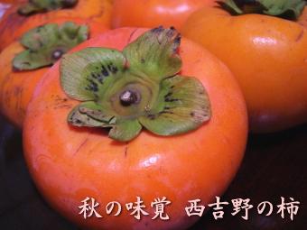 西吉野の柿
