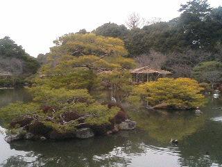 平安神宮の松