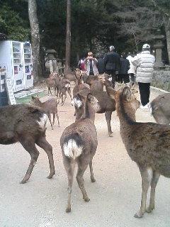 群れている鹿