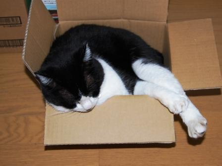 小さい箱とデカイ猫