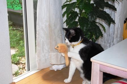 猫にゃのひとり遊び