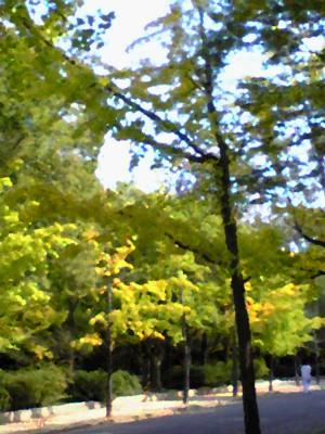 晩秋・公園1