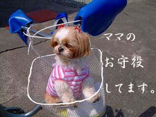 jitensya1s.jpg
