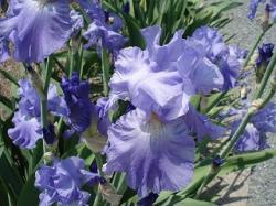 おじいちゃんの花