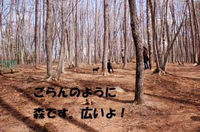 20070405172701.jpg