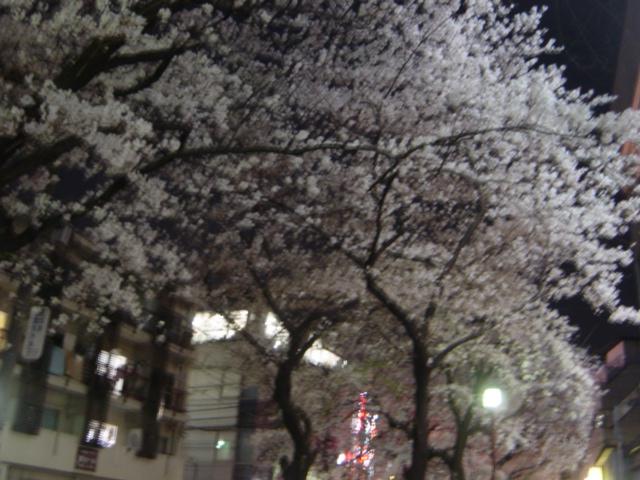 近所夜桜2