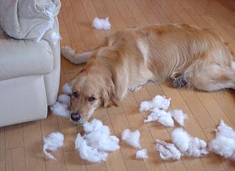 ソファの綿出し遊び
