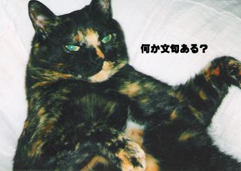 20071107_2.jpg