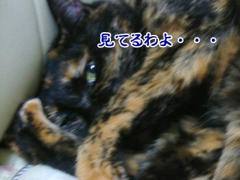 20071109_2.jpg
