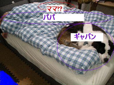 IMGP1061.jpg