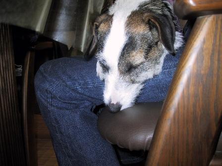 ももパパの膝の上で眠るもも