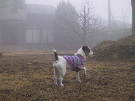 もや(霧)にビックリのもも