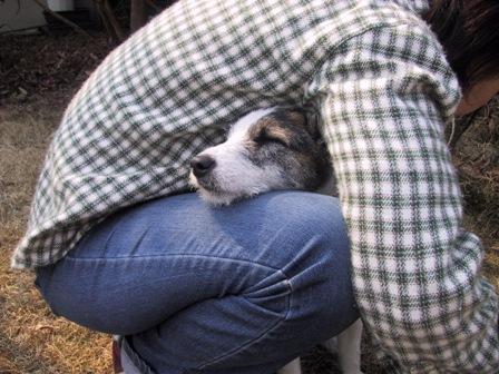 ママの膝の中で眠るもも