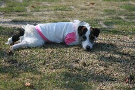 芝生の上に寝そべったもも