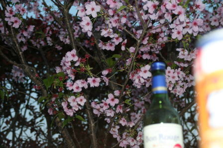 陽光桜の樹