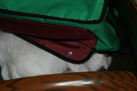 バッグをかぶって眠るもも?