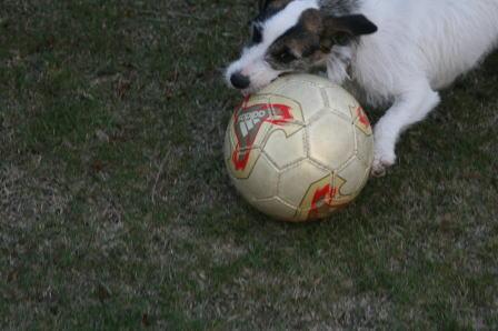 サッカーボールを追うもも(1)