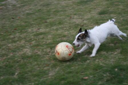 サッカーボールを追うもも(2)